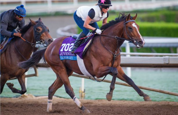 Santa Anita Horses Stay Busy For Breeders Cup 2016