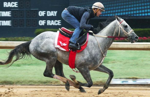 Gray Attempt_horse_Oaklawn Park 2019_615x400