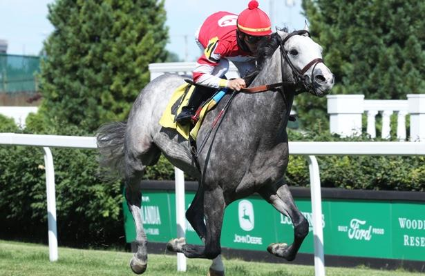 Horses To Watch: The next Chad Brown turf sensation?