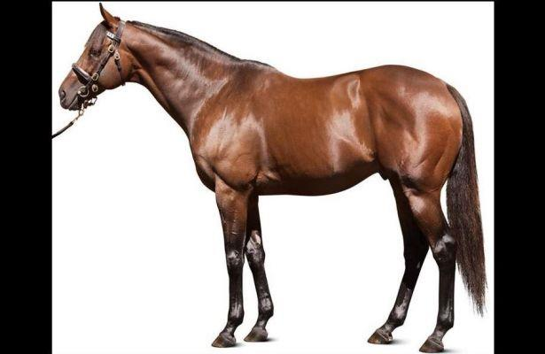 Hard Spun is a Dynamic and Excellent Sire