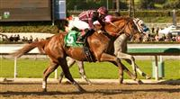 Hear the Ghost beats Flashback in the 2013 San Felipe.