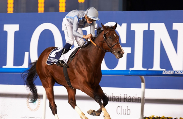 Dubai favorite Heavy Metal preparing for an encore season