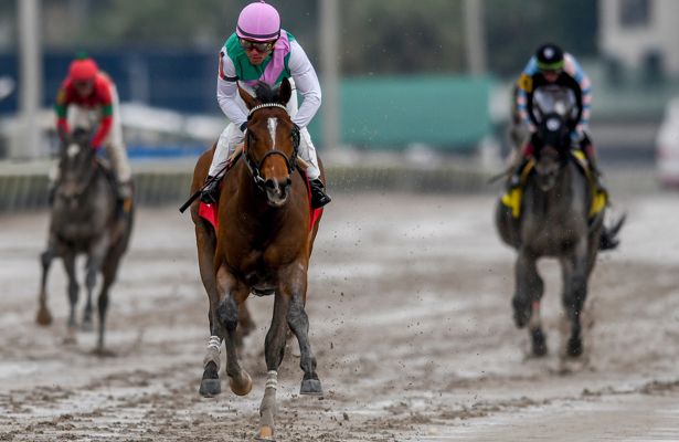 Kentucky Derby 2019 Radar: Rosario returns to Hidden Scroll
