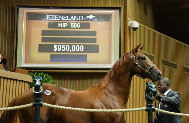 Scat Daddy Colt Sells for $950,000 at Keeneland (9-13-17).