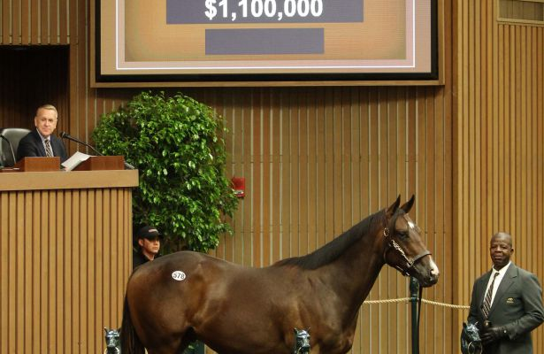 Hip 578 (Scat Daddy colt) sells for $1.1 million at Keeneland (9-13-17)