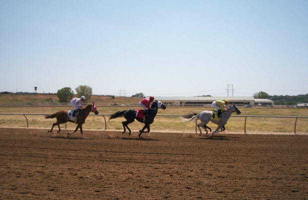 Horses race at Horseman's Park