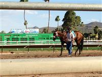 Porfido after the Hasta La Vista at Turf Paradise, 5/7/13.