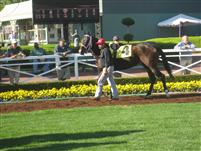 Kiss the Cooke - Santa Anita, Oct 30, 2009