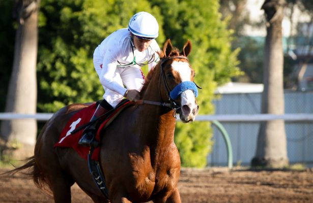 Improbable_horse_Los Alamitos Futurity 2018_615x400