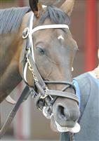 Interpatation in the paddock at Saratoga before the 2009 Bernard Baruch