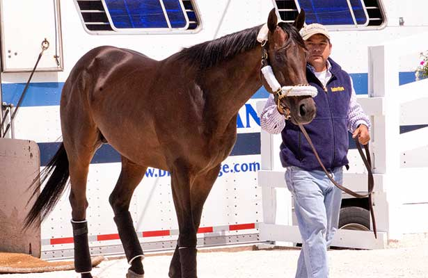 Itsmyluckyday arrives for Preakness 2013.
