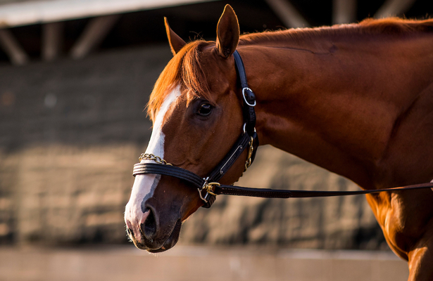 Justify near unanimous at No. 1 in NTRA Top Thoroughbred Poll