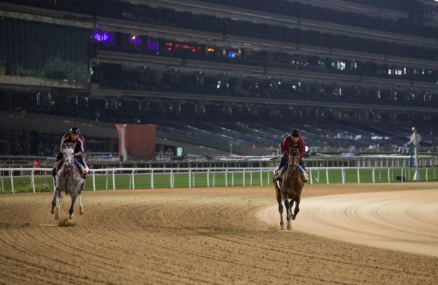 Baffert hoping Arrogate gives him 3rd Dubai World Cup win