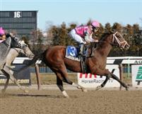 Law Enforcement wins the 2012 Hollie Hughes Stakes at Aqueduct.