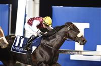 Le Bernadin seeks a record second victory in the Group 2 Al Maktoum Challenge for Purebred Arabians at the opening Dubai World Cup Carnival meeting at Meydan Racecourse on Thursday January 5, 2017.