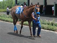 July 4, 2009: Le Cordon Bleu in Louisiana Downs paddock.