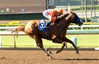 Lord Nelson wins at SA (6-3-16)