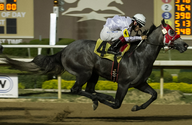 Equibase Introduces Quarter Horse Stats
