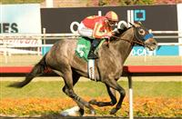 Midnight Hawk breaks maiden in BHP debut.