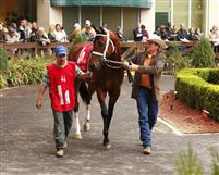 In the Paddock at Fairgrounds with trainer Larry Jones.