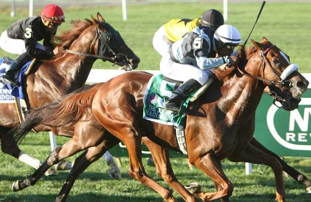 "September 27, 2014: Main Sequence with Rajiv Maragh win the 38th running of the $6000,000 Grade I Joe Hirsch Turf Classic, a ""Win and You're In"" 3-year olds & up, going 1 1/2 on the turf, at Belmont Park. Trainer: H. Graham Motion . Owner: Flaxman Stable . Sue Kawczynski/ESW/CSM"