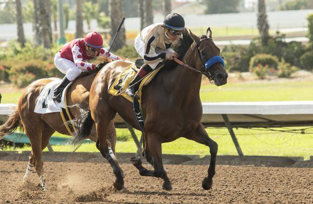 Marley's Freedom earns another graded stakes victory in Great Lady M.