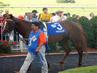 Massone at Louisiana Downs prior to finishing 3rd in the Grade 2 Super Derby.