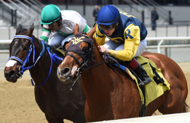 Champion American Pharoah gets first U.S. win as a sire