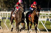 McCracken #8, ridden by Brian Joseph Hernandez (pink hat), overtaking State of Honor #1, ridden by Julien Leparoux (red hat), down the final stretch to win the Sam F. Davis Stakes at Tampa Bay Downs on February 11, 2017 in Oldsmar, Florida (photo by Douglas DeFelice/Eclipse Sportswire/Getty Images)
