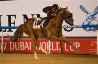 Mind Your Biscuits_Dubai Golden Shaheen 2017_615x400