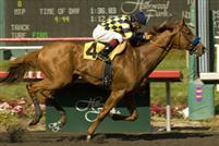 Misremembered takes the 2009 Swaps at Hollywood Park