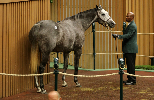 'Good and healthy' industry trends emerge at Keeneland November sale