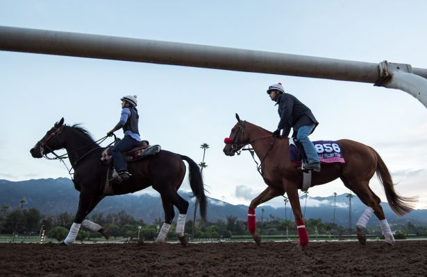 ARCADIA, CA - OCT 31: Miss Southern Miss, owned by Peter L. Cantrell and trained by J. Keith Desormeaux, exercises in preparation for the Breeders' Cup Juvenile Fillies Turf at Santa Anita Park on October 31, 2016 in Arcadia, California. (Photo by Scott Serio/Eclipse Sportswire/Breeders Cup)