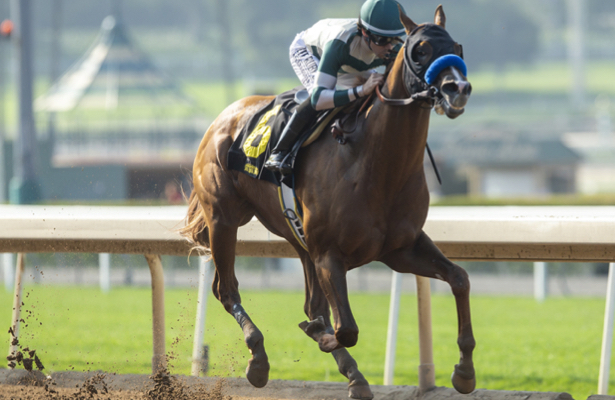 Analysis: In-form Mucho Gusto a Pegasus World Cup contender