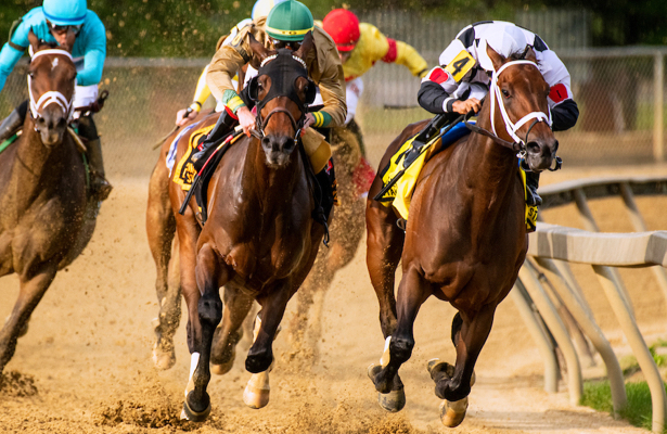 Mylady Curlin looks to add to stakes collection in Locust Grove