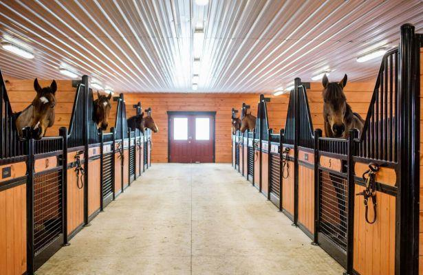 Over 180 retired horses helped by New Vocations at Mereworth Farm