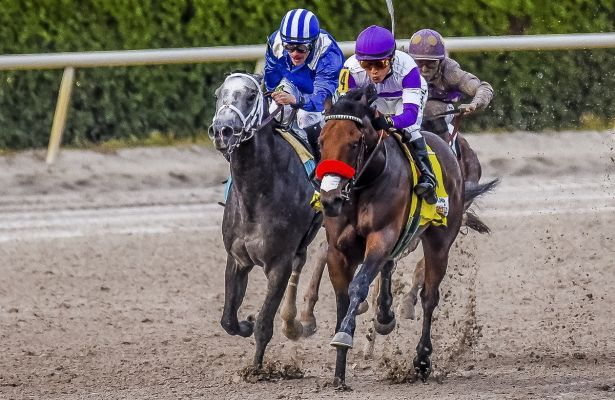 Nyquist_Mohaymen Florida Derby 615 X 400