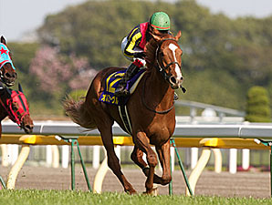 Orfevre goes for Triple Crown