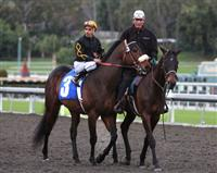 Papa Clem in post parade at Santa Anita Park.