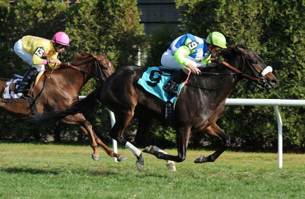 Parting Words breaks maiden at Aqueduct.