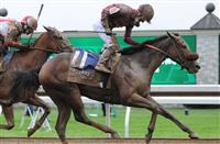 October 4, 2014: Peace and War and jockey Julien Leparoux win the Darley Alcibiades at Keeneland for owner Qatar Racing and trainer Olly Stevens. Jessica Morgan/ESW/CSM