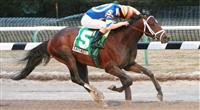 Stay Thirsty wins 2011 Gotham Stakes.