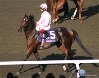 Henrythenavigator with John Velazquez in the 2008 Breeders Cup