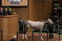 Royal Obsession sells for $1.15 Million during third session of Keeneland November Sale