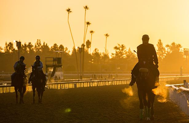 2013 Breeders' Cup: Wednesday Morning Eye-Catchers