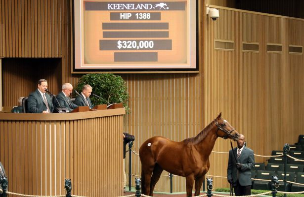 Saucy Dame sells for $320,000 at Keeneland Sale (11-8-18)