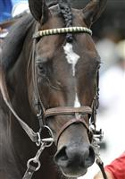 Seaspeak prior to the 2009 Bernard Baruch at Saratoga