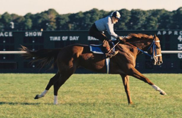 Secretariat runs on the turf during historic 1973 campaign (photo courtesy of Adam Coglianse)