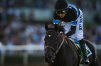 /horse/Shared Belief