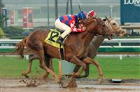 Sheer Flattery wins at SA (12-31-16)